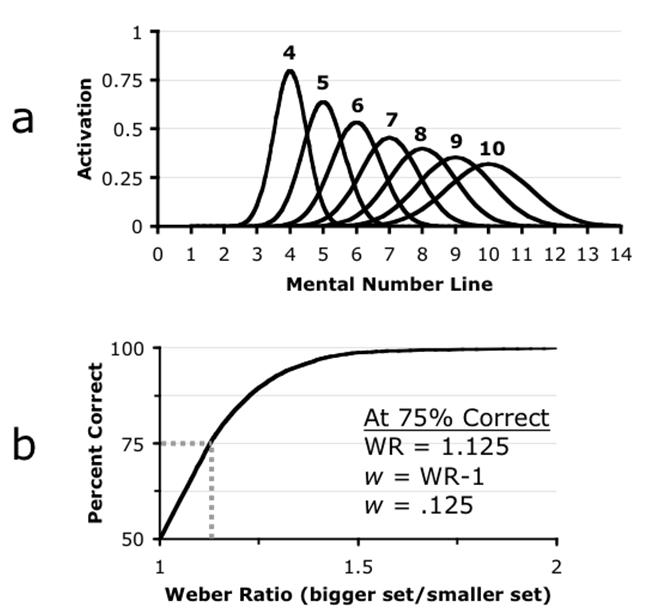 Figures 1a - 1b: Numerosity activations on the mental number line, and the Weber ratio.